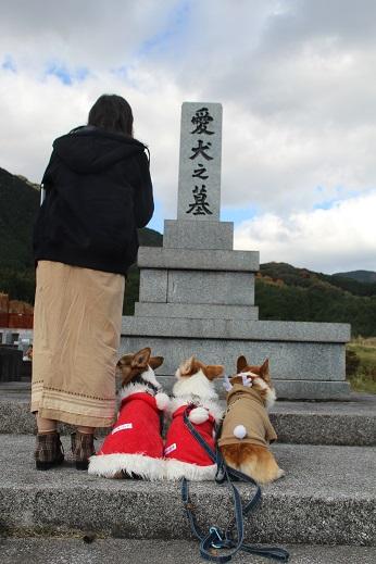 動愛園 2014-12-14-5