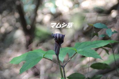 b_3799.jpg