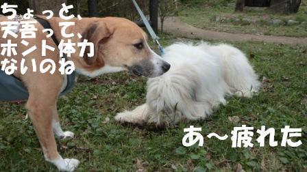 CIMG0624.jpg