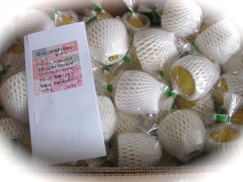 べっぴんレモン524