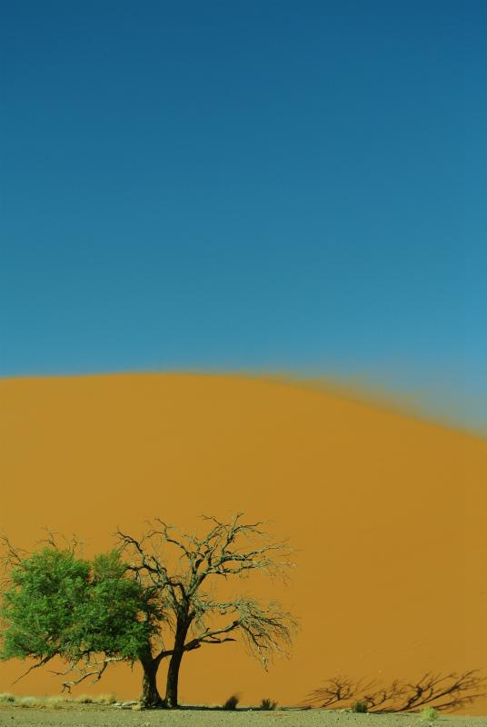 ナミビア14