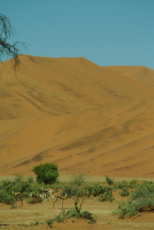 ナミビア19