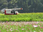 コンバインでの稲刈り風景