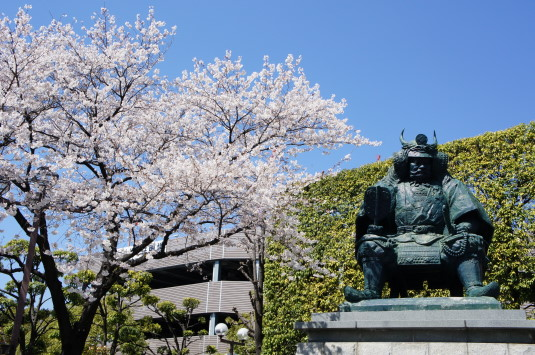 甲府駅前信玄公像 桜