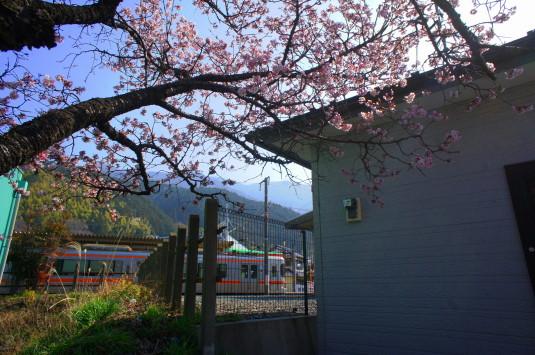 桜の花見 内船駅 電車