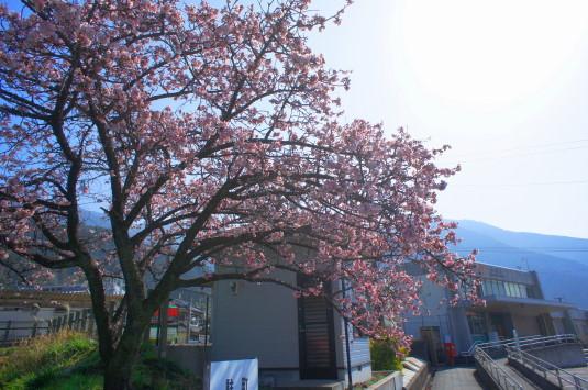 桜の花見 内船駅 外観