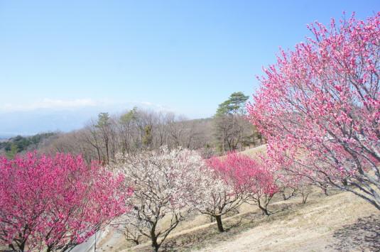 梅の花 敷島総合公園 外観