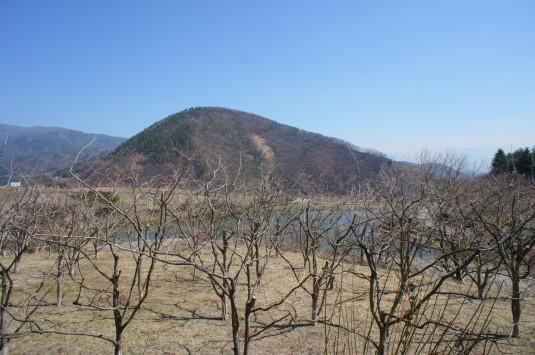 梅の花 矢木羽湖公園 展望台から