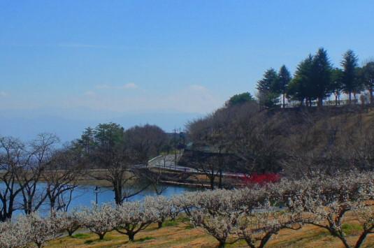 梅の花 矢木羽湖公園 富士山アップ