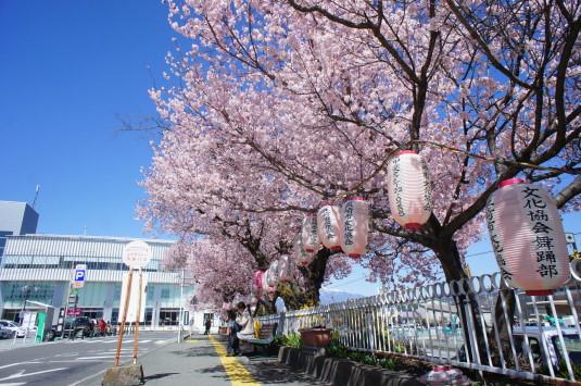 桜 韮崎駅前 近く