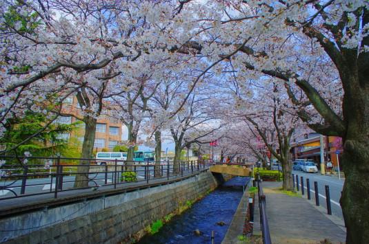 桜 さくら温泉通り 外観