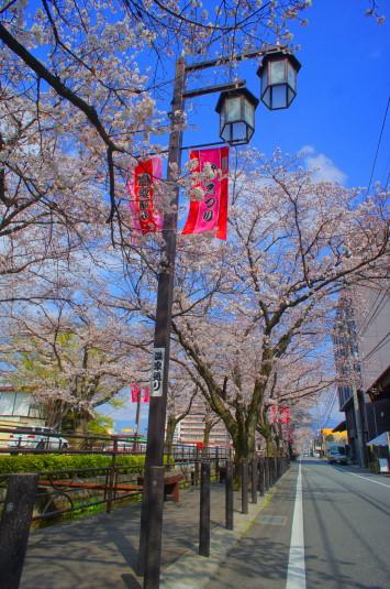 桜 さくら温泉通り 証明