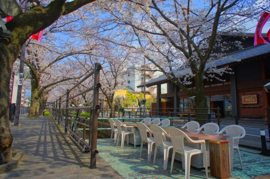 桜 さくら温泉通り デッキ