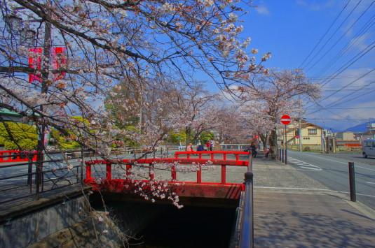 桜 さくら温泉通り 赤い橋