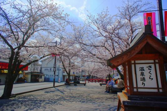 桜 さくら温泉通り 看板