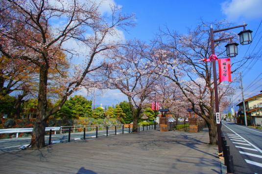 桜 さくら温泉通り 広場