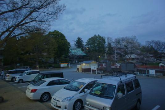 桜 信玄堤公園 ライトアップ 駐車場