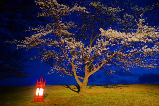桜 信玄堤公園 ライトアップ 桜
