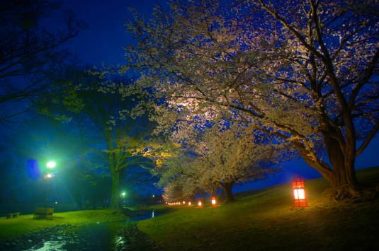 桜 信玄堤公園 ライトアップ 外観