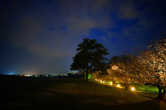 桜 信玄堤公園 ライトアップ 円形
