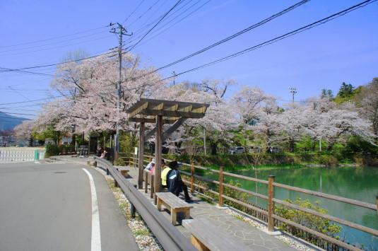 桜 月見が池 デッキ