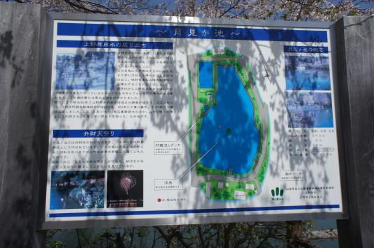 桜 月見が池 看板
