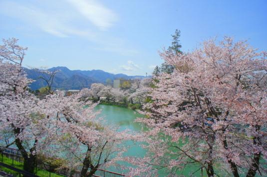 桜 月見が池 外観