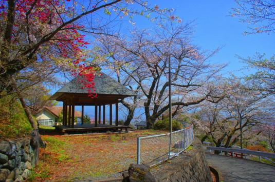 桜 御崎神社 入口