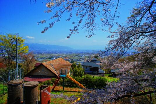 桜 御崎神社 遠景