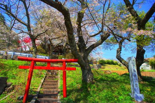 桜 御崎神社 外観