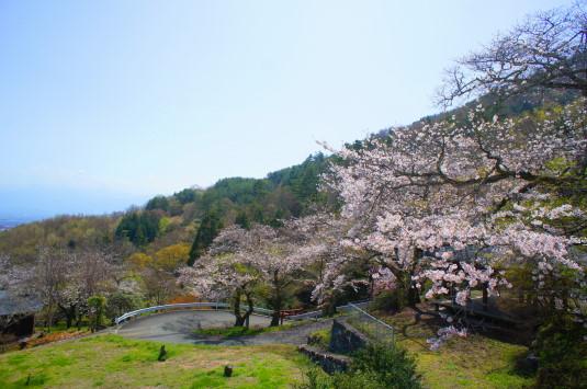 桜 御崎神社 景色