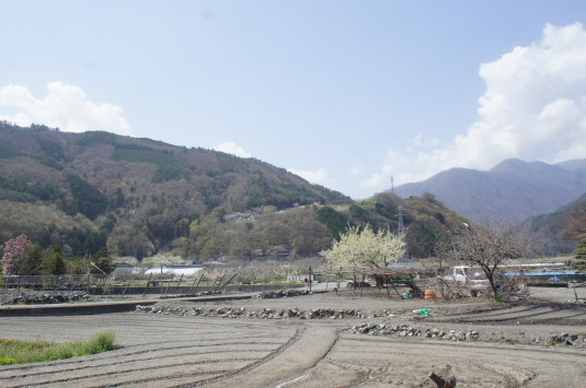 桜 御崎神社 山