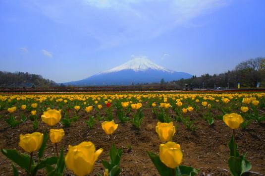 チューリップ 花の都公園 外観