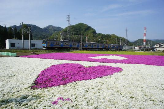 ハートの芝桜 電車
