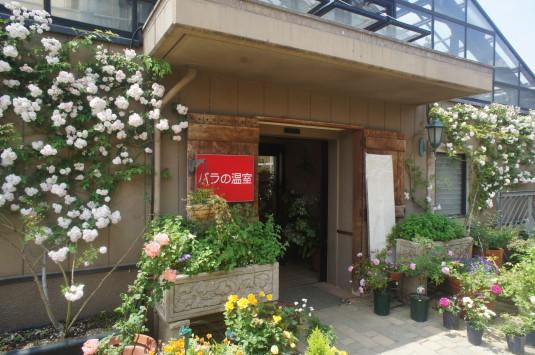 バラ ハイジの村 バラの温室