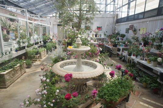 バラ ハイジの村 バラの温室 中