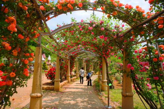 バラ ハイジの村 バラの回廊