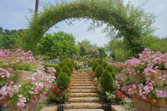 バラ ハイジの村 丘