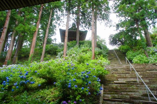 妙法寺 あじさい 階段と鐘楼