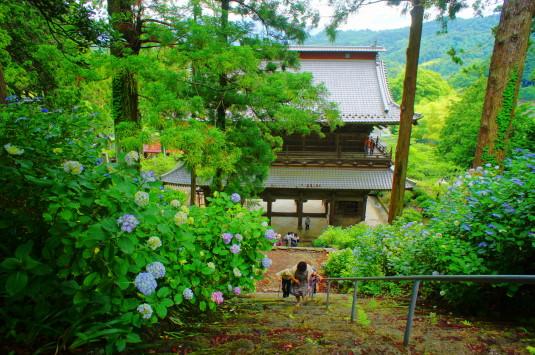 妙法寺 あじさい 階段ハード