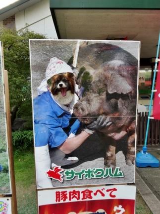 豚肉食べて~(笑)4