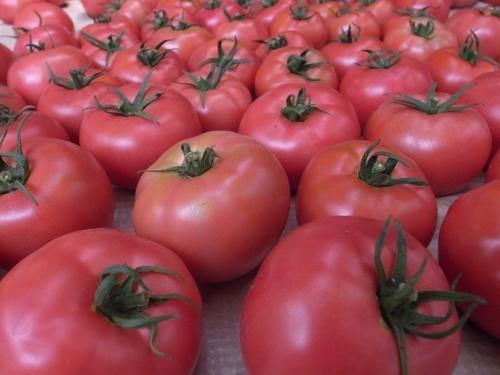 やなトマト