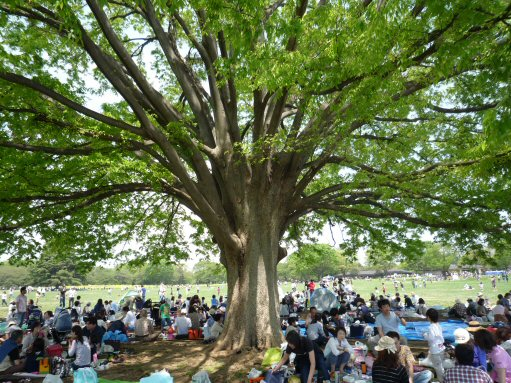 大きな木P1030725