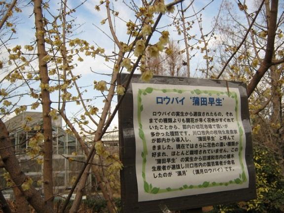 meotoshidare140126-103.jpg