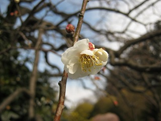 meotoshidare140126-201.jpg