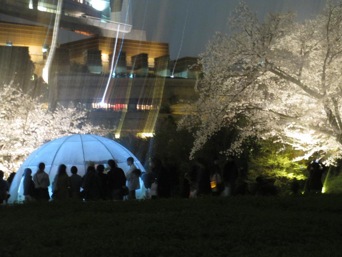 夜桜 ドーム