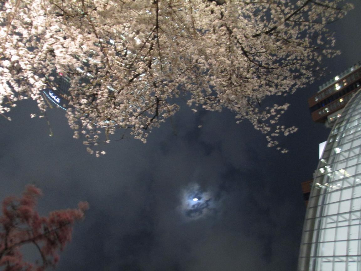 夜桜 おぼろ月夜