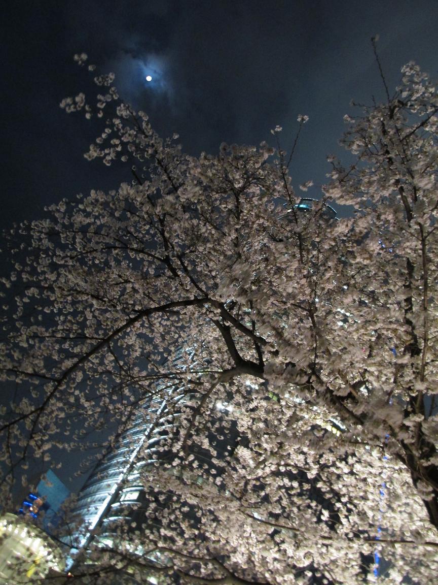 夜桜 おぼろ月夜2