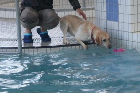 親戚会 プール