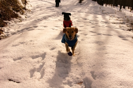 雪遊び 清里